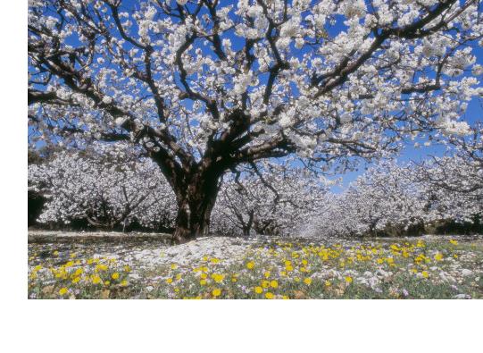 arboreal tree services san diego