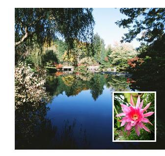 San Diego Garden Design Services U201c